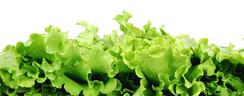 text_salat.jpg